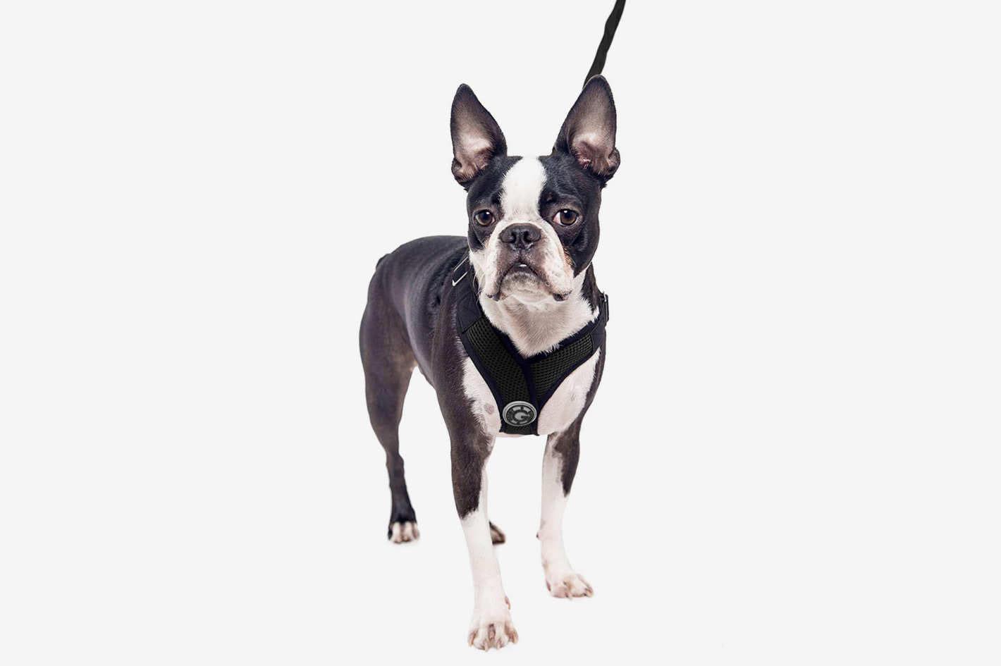 Come scegliere la migliore pettorina per il tuo cane