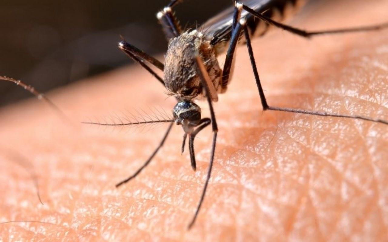 Eliminare le zanzare con la disinfestazioni